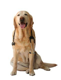 Doctor Dog - reduced