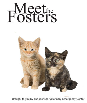 Meet-the-fosters-forweb