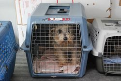 Puppy-mill-rescue