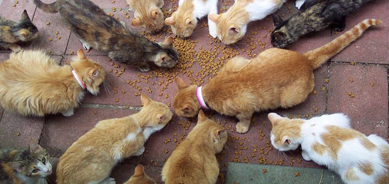 Feral feeding