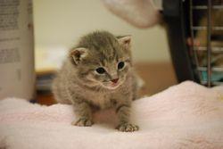 Single kitten