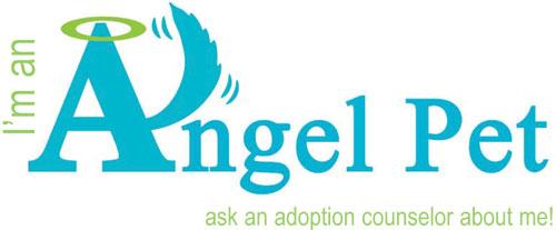 Angel-CC