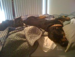 Pets staying home