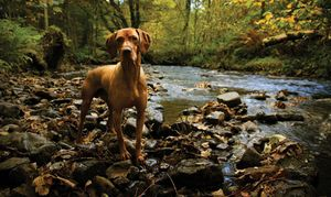 Dog-in-Creek-(istock)-2