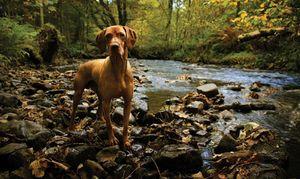 Dog-in-Creek-(istock)-2