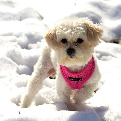 Snowdog Penelope