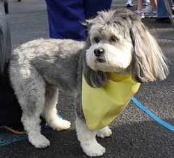 Lottie at the Dog Jog