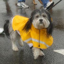 Lottie Dula at the Dog Jog