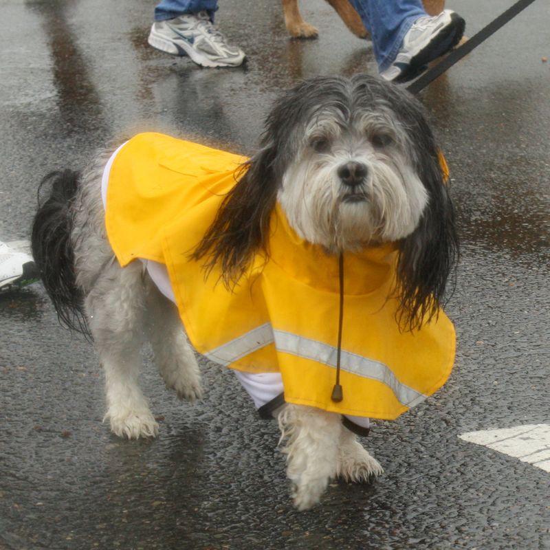 Lottie - dog jog for blog