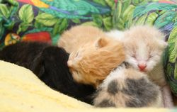 Kittens transferred from RACC 4/20/2012