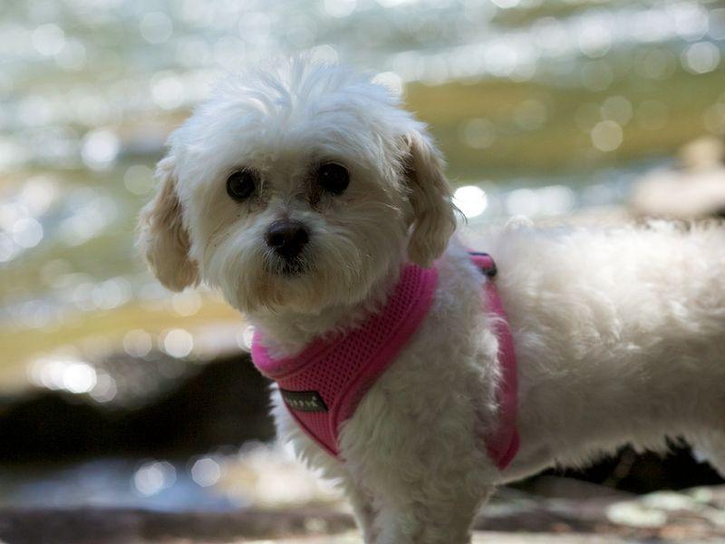 Penelope on Ellijay River