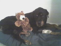 Gus&bear