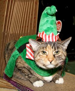 Norma the elf