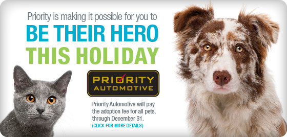 Priority is making it possible for you to be a hero to a homeless pet this holiday