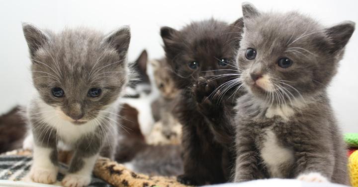 Three-kittens