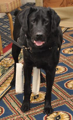 Romeo was adopted by Allen and Wanda King in 2008 after the Richmond SPCA provided orthopedic surgery that saved his leg after he was struck by a car.