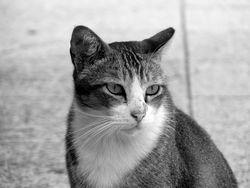 Stray_Cat credit Kok Leng Yeo