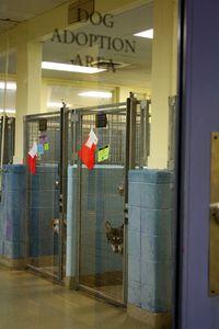 Dog Adoption area