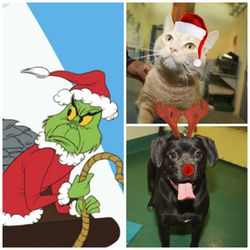 Adoption Grinch collage