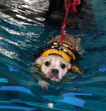 Sofia swimming