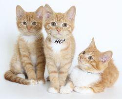 Hanover-henrico-chesterfiel