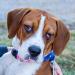 Beaglejuice