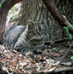 Feral-cats-726119