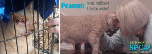 Peanut---ready-for-adoption