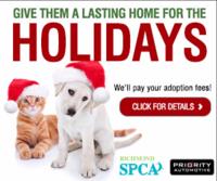 RICH-9898-SPCA-Adoptathon-Online-300x250_v2