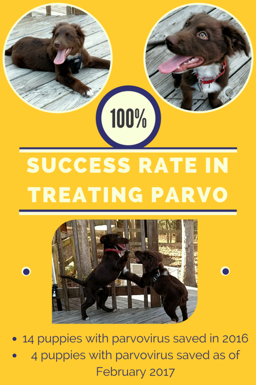 Alumni Update Rowan And Reese Survive Parvo To Thrive In New Homes