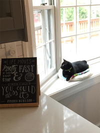 Callie window seat