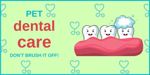 Pet dental care - blog image (2)