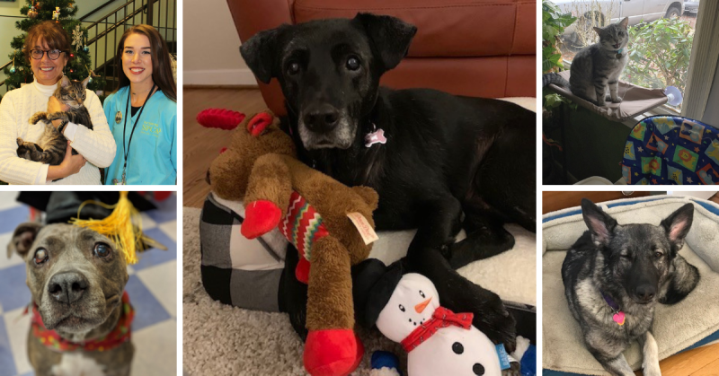 Holiday adoption collage
